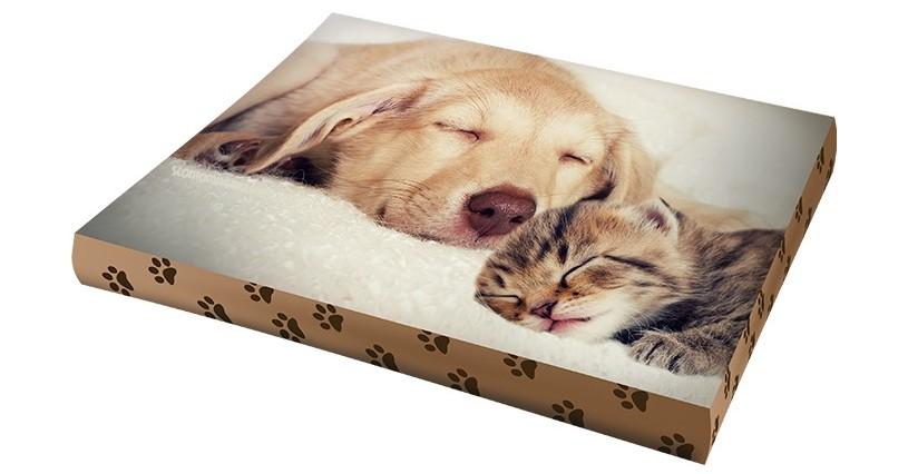 Pet Lover Days vinci cuscini con foto personalizzata