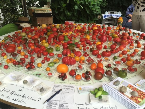 All tomatoes shall be grown!