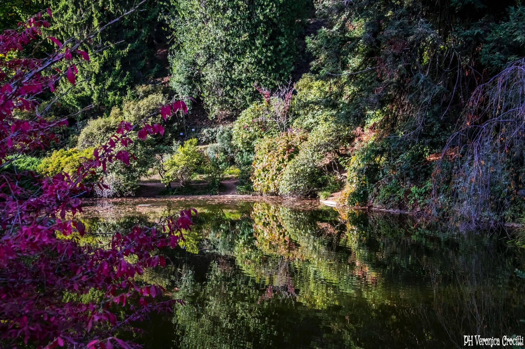 Parco della Burcina, Biella (Piemonte, Italia)_15
