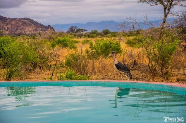 Tarangire National Park, Tanzania (Africa)