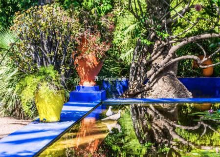 Jardin Majorelle, Marrakech - Marocco _3