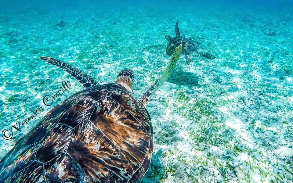 Tartarughe giganti, Gili Meno - Indonesia