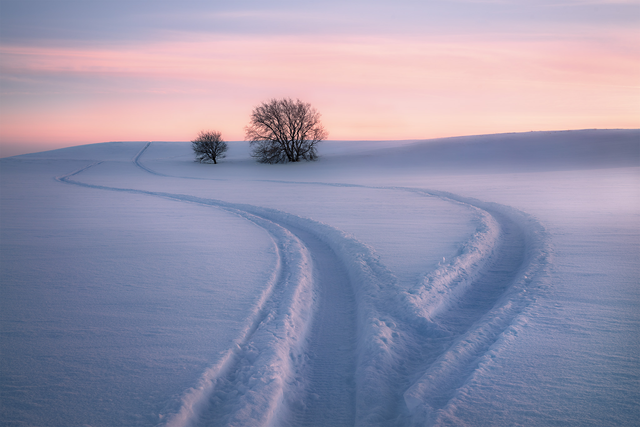 A nature photograph of two trees surrounded by deep snow in Saskatchewan