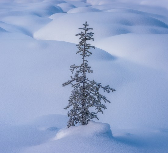 A winter landscape photograph taken in the Canadian Rockies at Yoho National Park