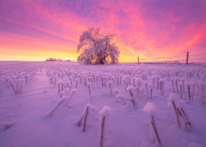 Nature photography of a Saskatchewan sunrise. A burning sky reflects on hoar frost and snow