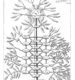 kircher s philosophical tree representing all branches of knowledge from ars magna sciendi 1669  [ 1735 x 2567 Pixel ]