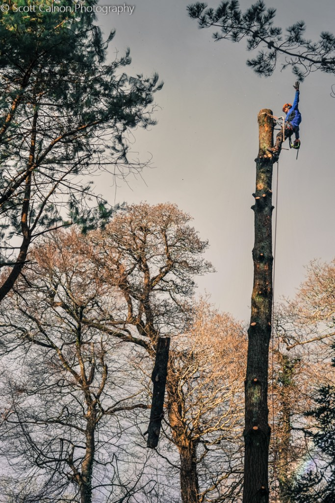 new-tree-cutting-nationaltrust