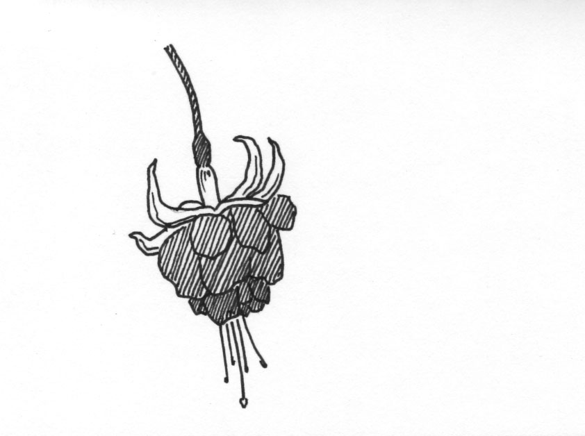 fine line pen | Sketch 365