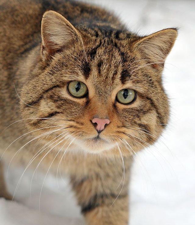 Ye Olde Pussy Cat