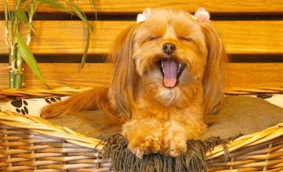 Image result for The Importance of Grooming Your Dog in the Winter