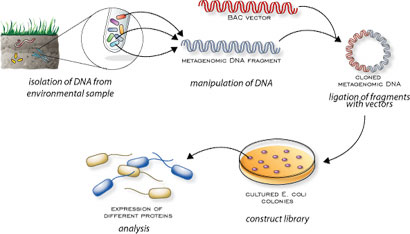 metagenomic[1].jpg