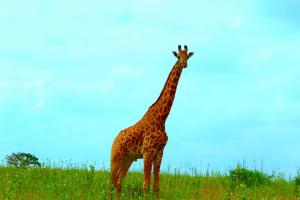 Kenya_Wildlife