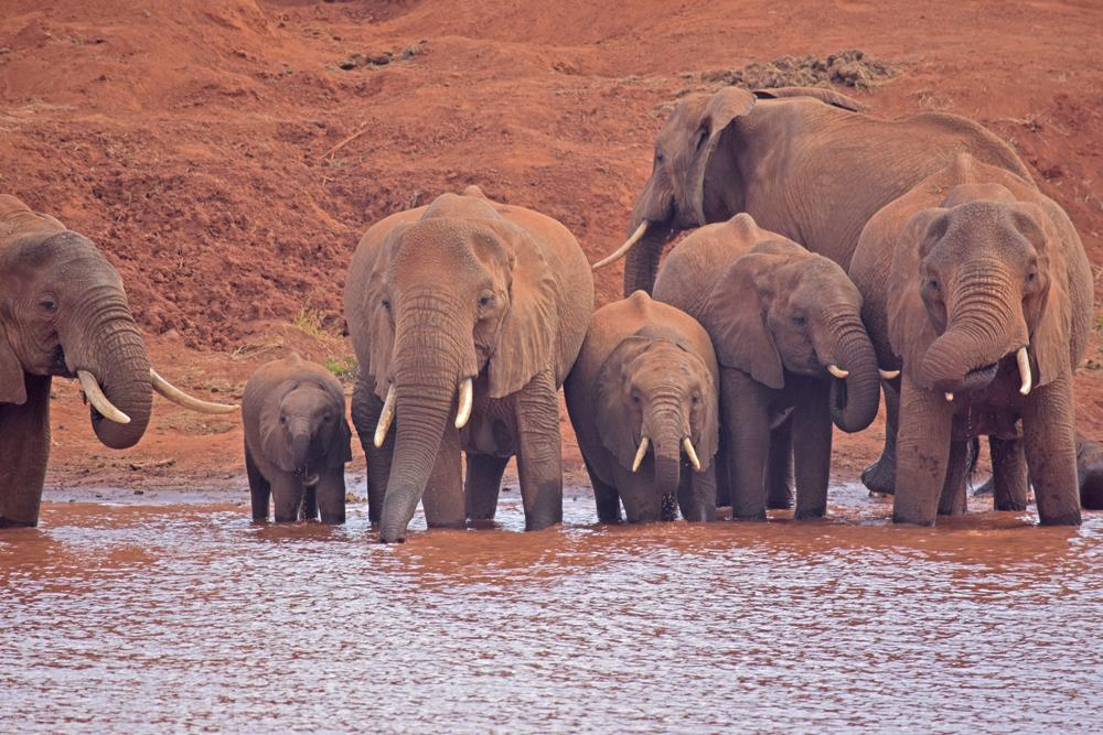 Tsavo_National_Park