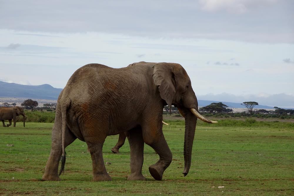 Amboseli_Kenya