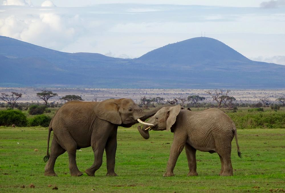 Amboseli_National_Park