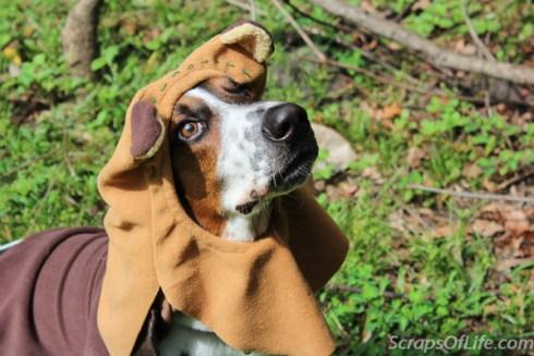 jvanderbeek_howl_halloween_dog_costumes_-9
