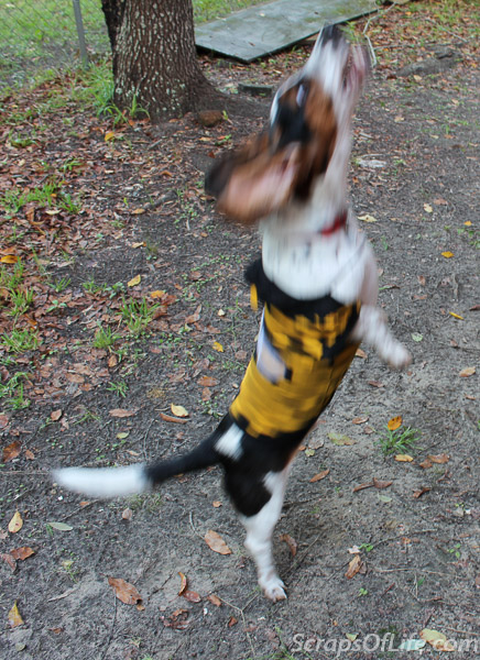jvanderbeek_howl_halloween_dog_costumes_bee-2
