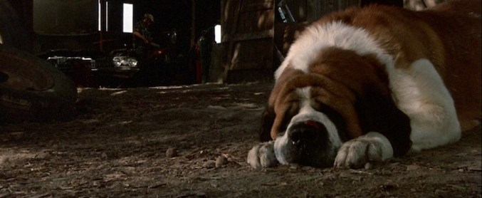 Cujo Remake is Titled C.U.J.O. - THE HORROR ENTERTAINMENT
