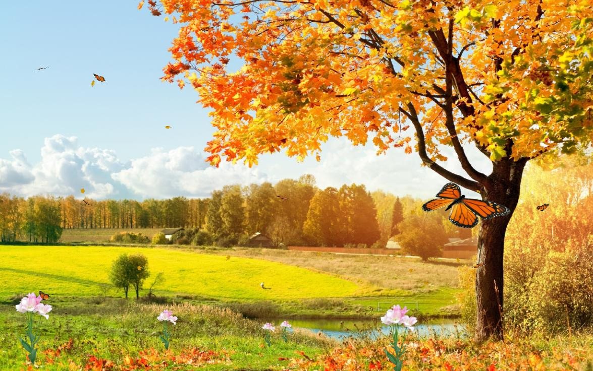 Forest Animated Wallpaper Beautiful Nature Screensaver