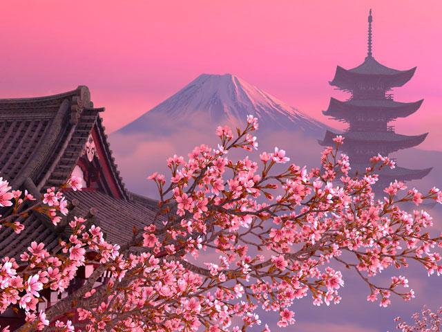 blooming sakura 3d screensaver