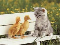 cute cats screensaver for