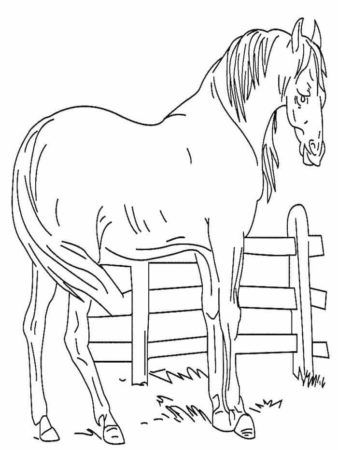 35 Free Horse Coloring Pages Printable