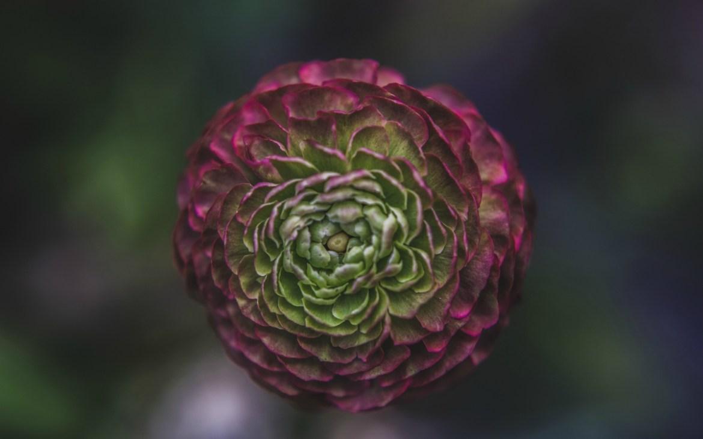 Optimized-Flower