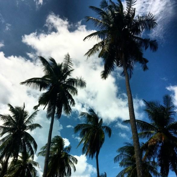 Palm trees in Koh Lanta