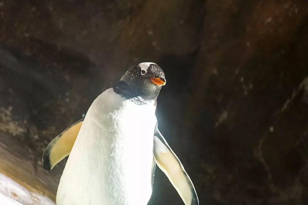 Ocean Park Hong Kong North Pole Encounter Penguin.