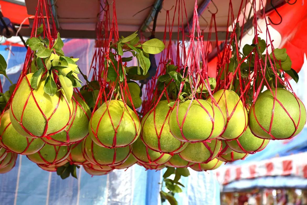 Chinese New Year Pomelos