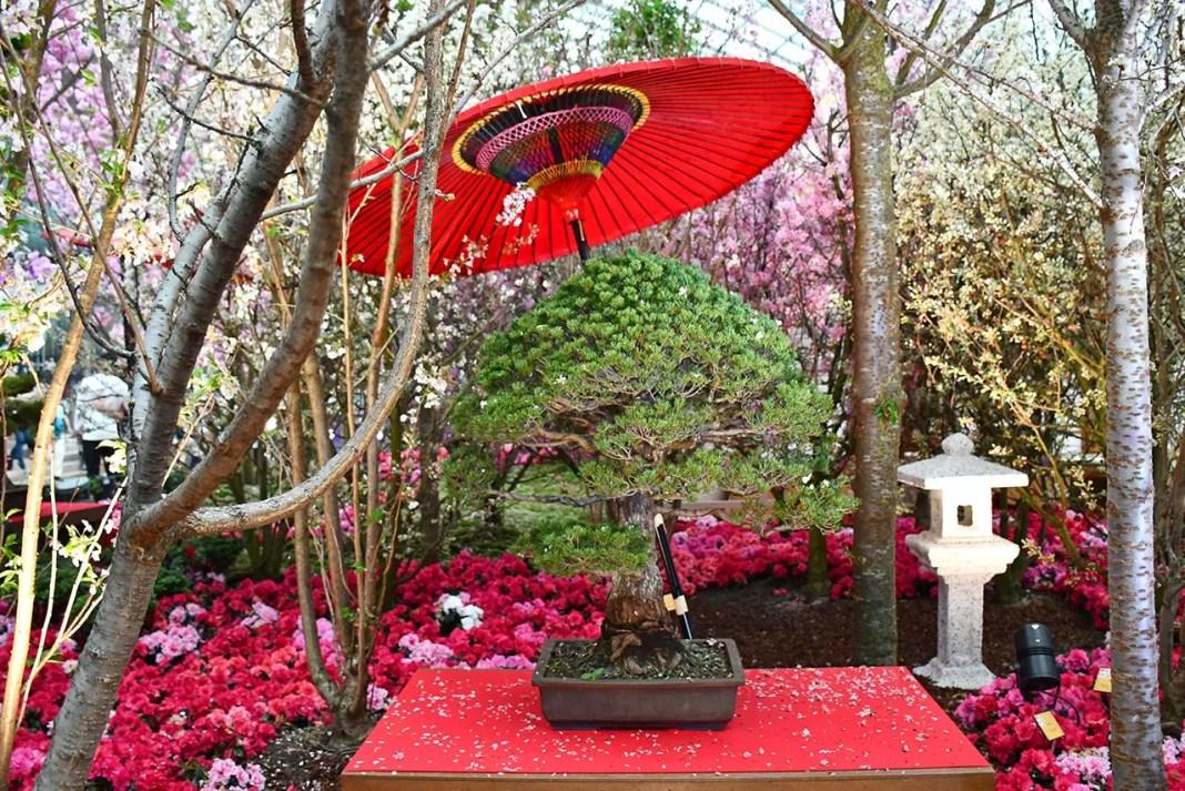 Sakura Japan Fair 2018   Gardens by the Bay