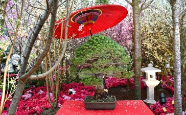 Sakura Japan Fair 2018 | Gardens by the Bay