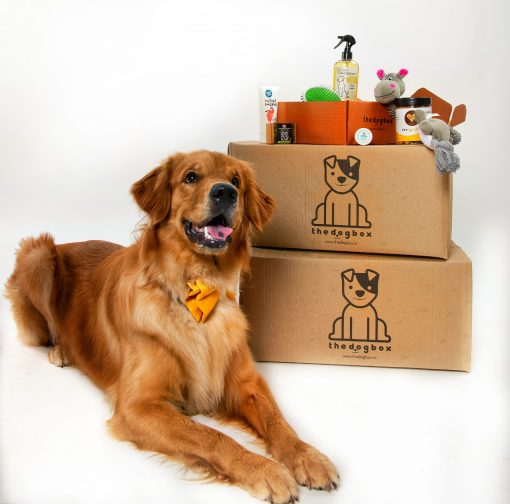 food box for dogs