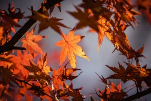 creative writing, fall, autumn, fall is here, fall favorites, lifestyle