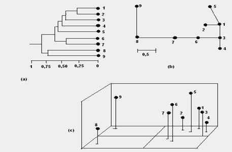Sistematica si taxonomia lumii vii. Arta de a clasifica
