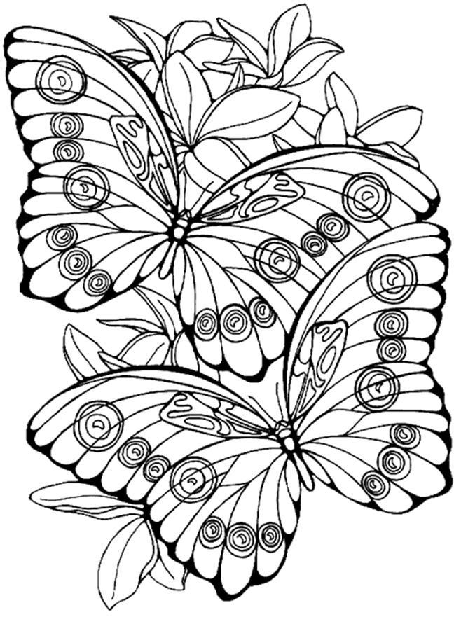 Planse De Colorat Cu Flori Si Fluturi Desene De Colorat