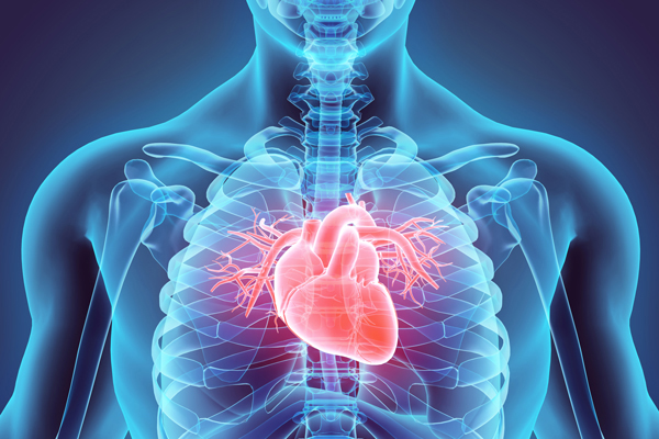 Image result for heart disease