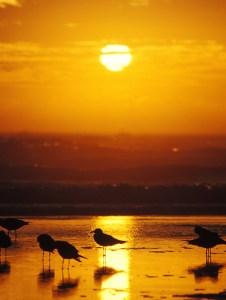 sunrise florida photo