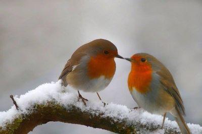 Risultati immagini per uccelli sugli alberi