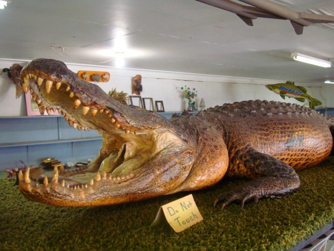 RL Reeves Jr Considers The Louisiana Alligator