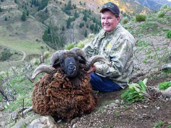Arapawa Ram Hunting Ram Hunts in New Zealand  Spey Creek