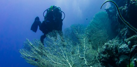 An independent Diver