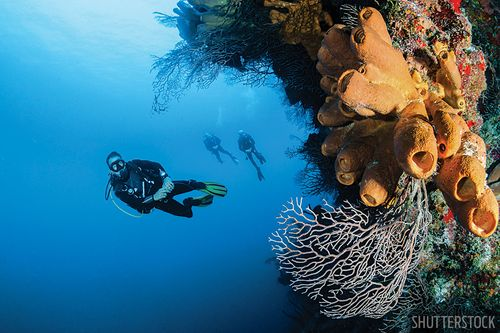 20 Reasons To Dive Indonesia Scuba Diving
