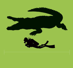 Crocodile size compared with a person