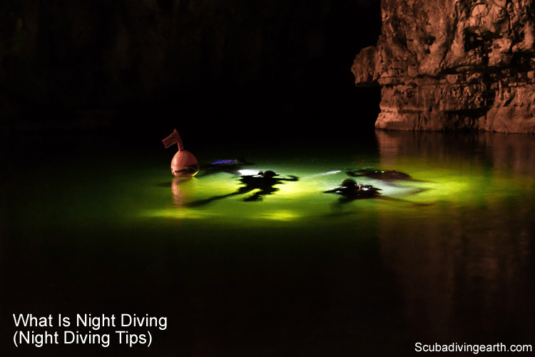 What Is Night Diving Night Diving Tips
