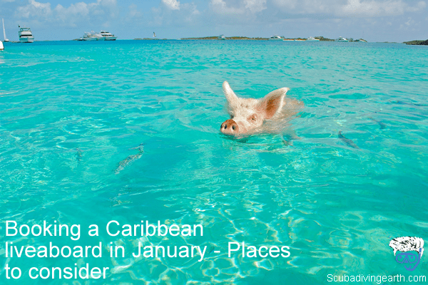 Booking a Caribbean liveaboard in January - Places to consider