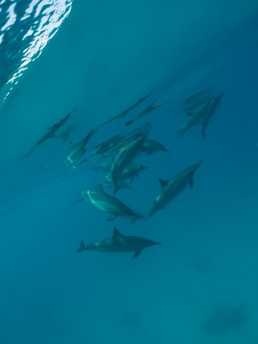 dolphins, fishinfocus, Scuba Travel, underwater photography
