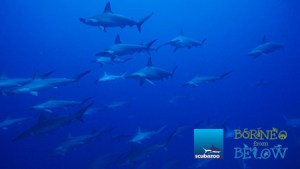 City Centre Scuba: From the Skies to Sharks in 60 minutes! | Borneo