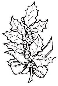 Foglie di pungitopo da colorare  Disegni di Natale