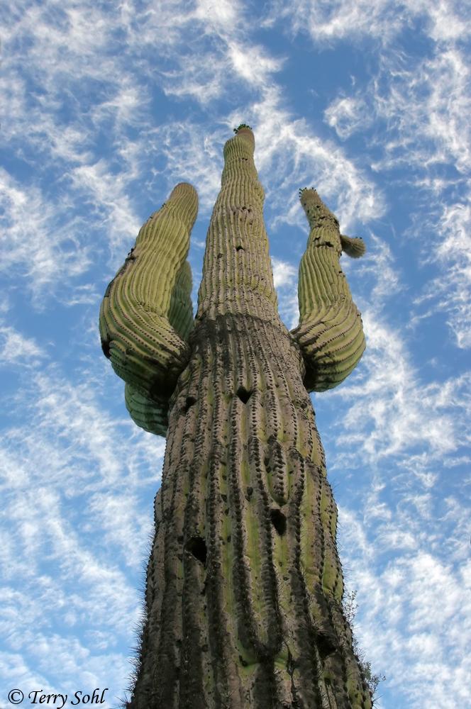 Saguaro Sky - Tucson, Arizona